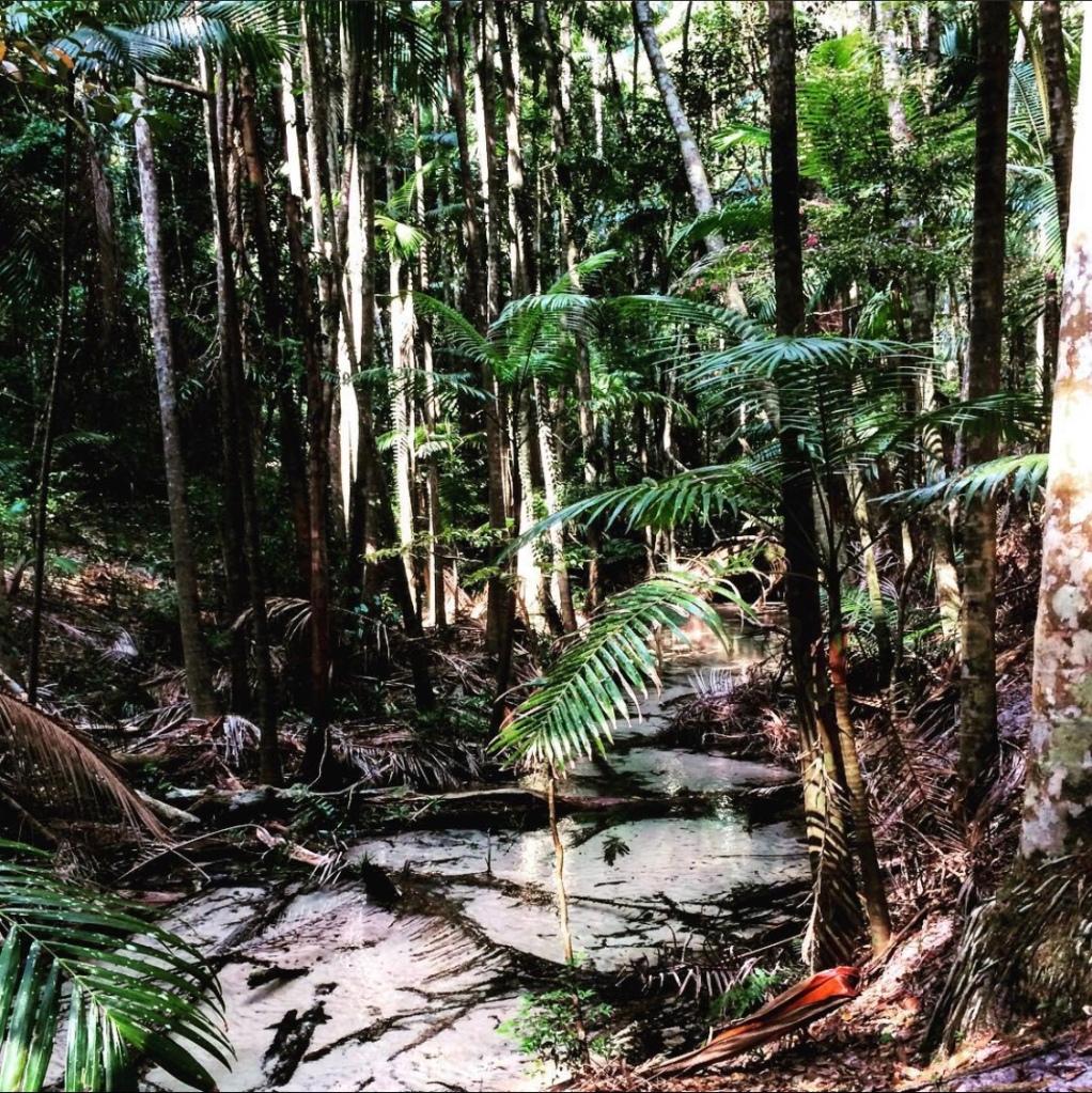 Amazon Rainforest, Ecuador, South America